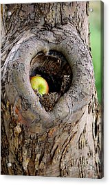 Close To The Heart Acrylic Print by Vicki Pelham