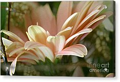 Close-uo View Acrylic Print by Cecilia Blignaut
