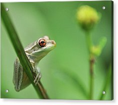 Close Up Of Frog Acrylic Print by Lon Fong Martin