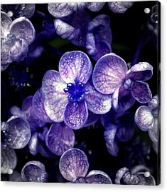Close Up Of Purple Flowers Acrylic Print by Sner3jp