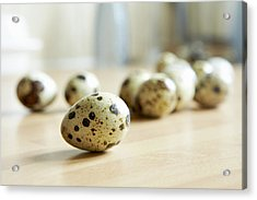 Close Up Of Quail Eggs On Counter Acrylic Print by Debby Lewis-Harrison