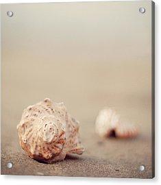 Close Up Of Shells On Beach Acrylic Print by COPYRIGHT© Marianna Di Ferdinando