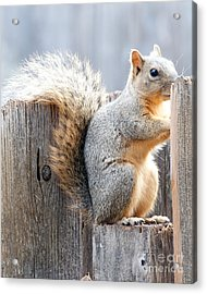 Checking If The Yard Clear For Dinner Acrylic Print