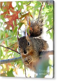 Eating In Peace Acrylic Print
