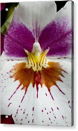 Close-up Of The Center Of An Orchid Acrylic Print by Todd Gipstein