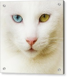 Close Up Of White Cat Acrylic Print by Blink