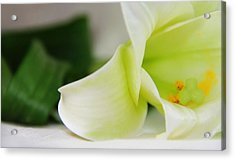 Close-up On White Lilies Acrylic Print by Gal Ashkenazi
