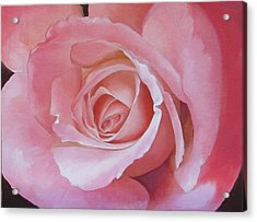 Close Up Painting Of Pink Rose Acrylic Print