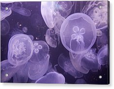 Close View Of Jellyfish Acrylic Print by Stacy Gold
