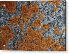 Close View Of Orange Lichen Growing Acrylic Print by Stephen Sharnoff