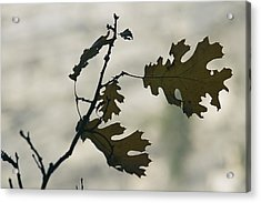 Close View Silhouette Of A California Acrylic Print by Marc Moritsch