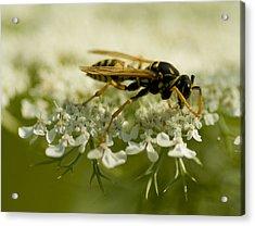 Closer Look 2 Acrylic Print by Jack Zulli