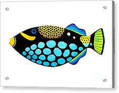 Clown Triggerfish  Acrylic Print by Opas Chotiphantawanon