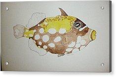Clown Triggerfish Acrylic Print by Tim Forrester