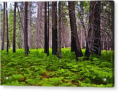 Cluster Of Ferns Acrylic Print by Camille Lyver