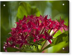 Cluster Of Red Acrylic Print