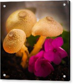Clustered Fungi Acrylic Print by Gene Hilton
