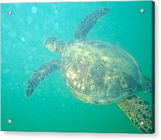 Clyde The Sea Turtle Acrylic Print by Erika Swartzkopf