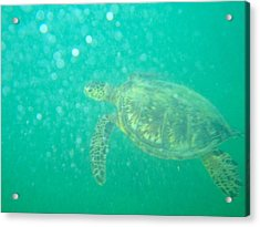 Clyde The Turtle Three Acrylic Print by Erika Swartzkopf