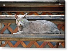 Clyde's Rest Time Acrylic Print by James Steele