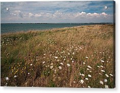 Acrylic Print featuring the photograph Coastal Flowers by Shirley Mitchell