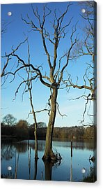 Coate1 Acrylic Print by Michael Standen Smith