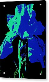 Cobalt Iris Acrylic Print by Todd Sherlock