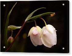 Acrylic Print featuring the photograph Cobra Lilly by Gary Rose