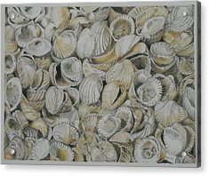Cockle Shells Acrylic Print