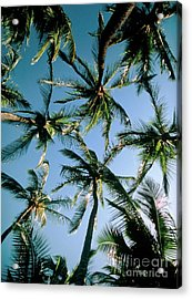 Coconut Palms Acrylic Print by Magrath Photography