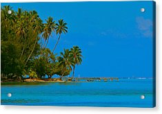 Acrylic Print featuring the photograph Coconuts Anyone by Eric Tressler