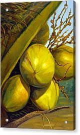 Coconuts Series One Acrylic Print by Jose Romero