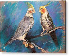Coctaiel Parrots Acrylic Print by Ylli Haruni