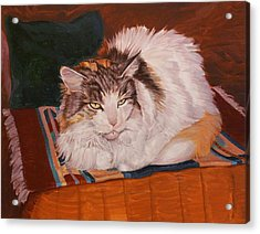 Cody Is Just Chillin Acrylic Print by Shawn Shea