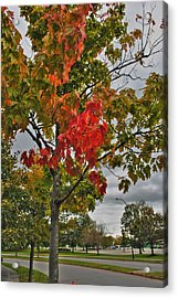 Acrylic Print featuring the photograph Cold Autumn Breeze  by Michael Frank Jr