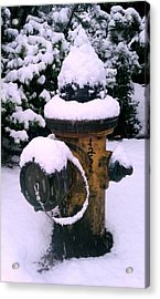 Cold Territory Acrylic Print by Kevin D Davis