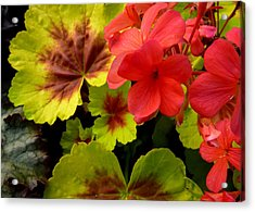 Acrylic Print featuring the photograph Coleus And Impatiens Blooms by Cindy Wright