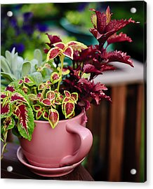 Coleus Collection Acrylic Print by Michael Putnam