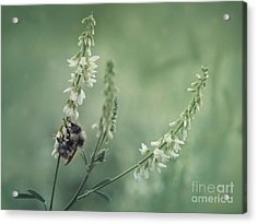 Collecting The Summer Acrylic Print by Priska Wettstein