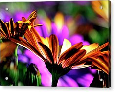 Color And Light Acrylic Print