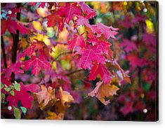 Color Acrylic Print