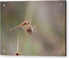 Color Coordinated Acrylic Print
