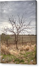 Acrylic Print featuring the photograph Color - Country Tree by Peter Ciro