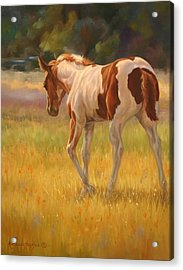Color Foal Acrylic Print by Kathleen  Hill
