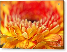 Color Of Summer II Acrylic Print by Angela Doelling AD DESIGN Photo and PhotoArt