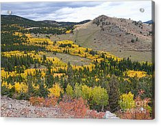 Colorado Autumn Aspens Colors Acrylic Print by James BO  Insogna