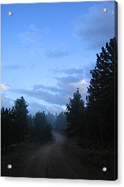 Colorado Pine Forest In Mist Acrylic Print by Ric Soulen