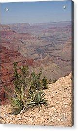 Colorado River Grand Canyon National Park Arizona Usa Acrylic Print