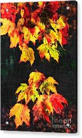 Colorful Autumn Leaves IIi Acrylic Print by Dan Carmichael