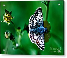 Colorful Butterfly Acrylic Print by Mitch Shindelbower
